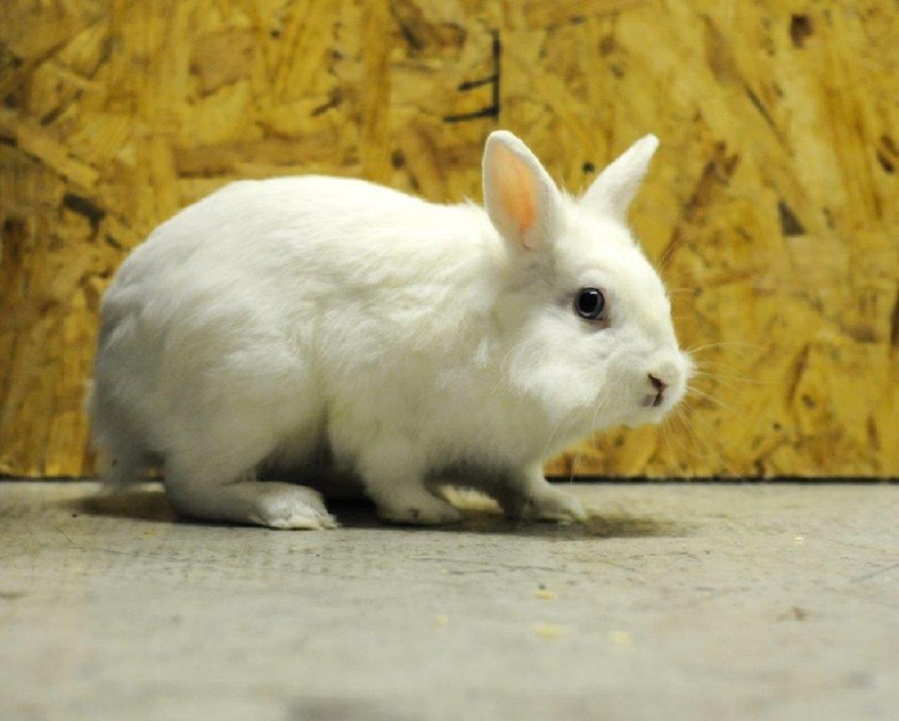 Oasi di Camilla - coniglietto